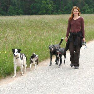 3 Erwachsene Hunde/Adult dogs