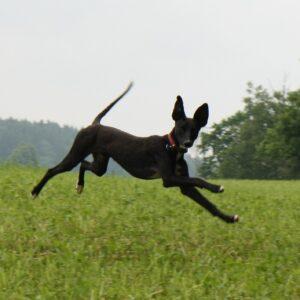 2 Junghunde Neueinsteiger / Teenage dogs newcomer